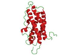 struktura prolaktina