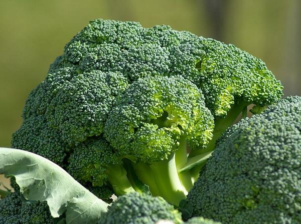 brokoli povrce