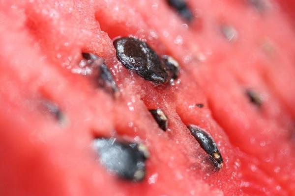 seme lubenice