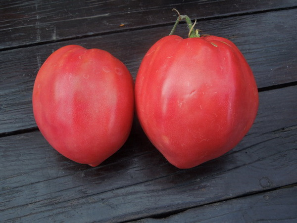 paradajz volovsko srce