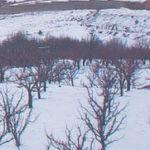 Plavo ulje za zimsko prskanje voća i loze