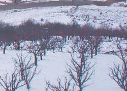 zimsko prskanje
