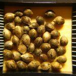 Seme konoplje kao lek u ishrani recepti prodaja cena