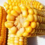 Kuvani kukuruz kako se kuva i koliko recept kalorije i zdravlje