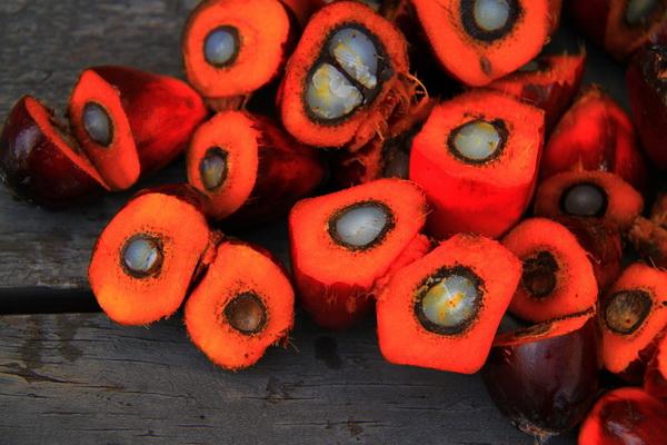 ulje-crvene-palme