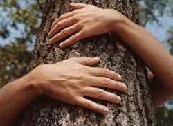 zagrli-drvo