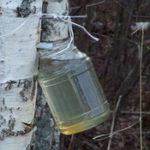 Sok od breze iz drveta