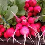 Rotkvice prolećna vitaminska salata