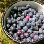 Sok od bobica borovnice kao lek