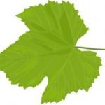 Vinova loza koja se ne prska ili se ređe prska