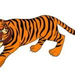 Tigrova mast – najpoznatija krema protiv bolova na svetu