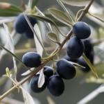 Namaz od maslina crnih i zelenih – tapenada