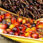 Palmino ulje u ishrani za prženje i upotreba u kozmetici za kosu i kožu