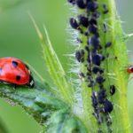 Kako se rešiti mrava u bašti i kući
