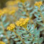 Adaptogene biljke protiv stresa i za brži oporavak organizma
