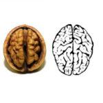 Zašto orah izgleda kao mozak, a pasulj kao bubreg? Ti si ono što jedeš (video)