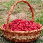 Domaći liker od maline – kako napraviti malinovac