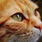 Kako mačke deluju isceljujuće na ljude