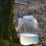 Brezova voda – 9 pozitivnih efekata na organizam