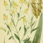 RUSI OBJAVILI VAŽNE VESTI: Ova biljka je čudo, pomaže kod korone, a ima je i kod nas