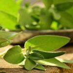 OJAČAJTE PLUĆA ODMAH – lekovite biljke za disajne organe
